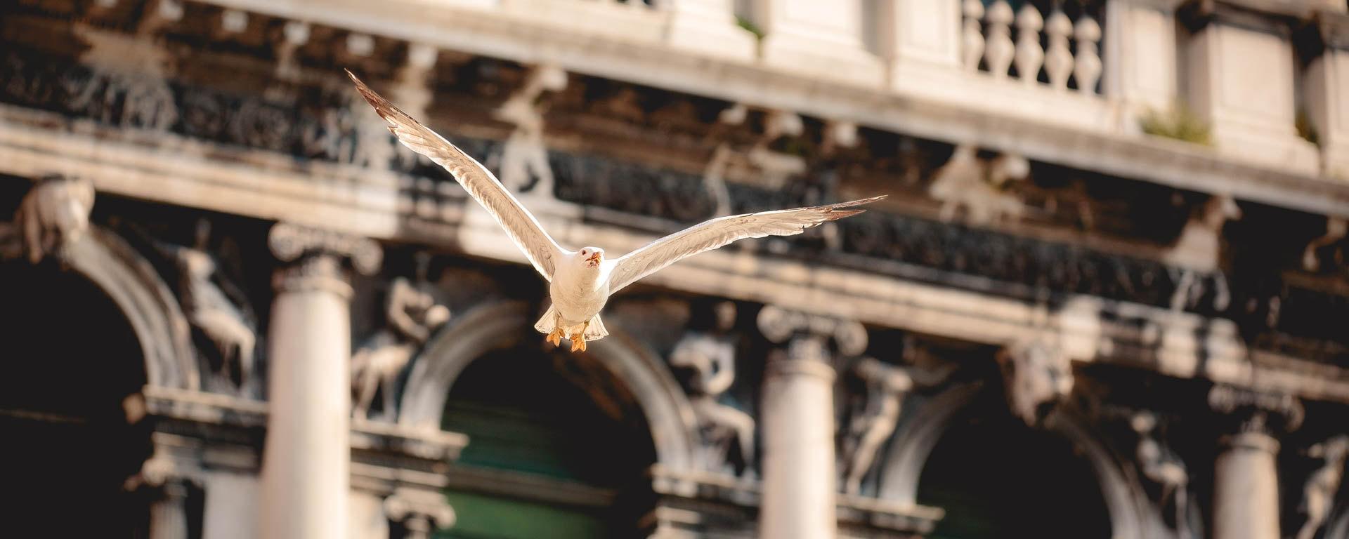 Möwe fliegt über den Markusplatz mit weissen Marmorfassaden im Hintergrund, Beitragsbild für Blogartikel